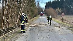 Baum blockiert Straße