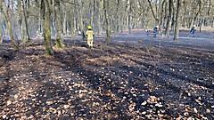 Waldbrand Punitz